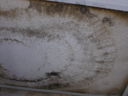 Mold Picture Page